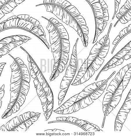 Tropical Palm Leaves Sketch Seamless Pattern, Jungle Banana