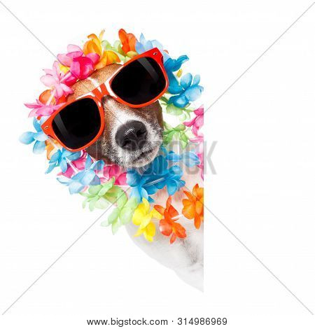 Funny Jack Russell Dog Wirhg  Hawaiian  Lei And Sunglasses With White Banner Isolated On White Backg