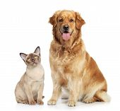 Cat and dog together on a white background poster