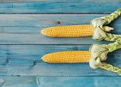 Freshly picked ear of corn, sweet maize cob with husk on rustic blue wood background, top view poster