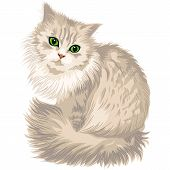 cute lilac cat with green eyes isolated on the white background poster
