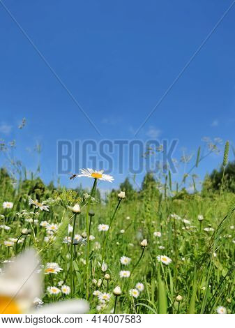 Meadow And Wildflowers Against A Blue Sky In Sunny Weather.
