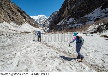 Group Of Trekker Walking On The Snowfield In Annapurna Sanctuary Of Nepal. Annapurna Sanctuary Trek
