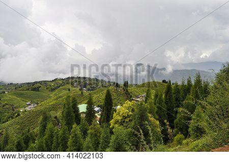 Organic Tea Garden Spans Across A Slope In Darjeeling District.