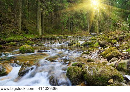 Fast Forest River Flowing Among Mossy Stones