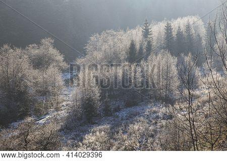 Winter Landscape In The Mountains. Trees In Hoarfrost In Sunlight. Carpathians. Ukraine