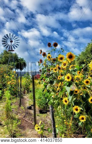 SANTA ANA, CA - APRIL 14, 2017: Windmill and wildflowers in Gospel Swamp Natural Area at the Heritage Museum of Orange County.