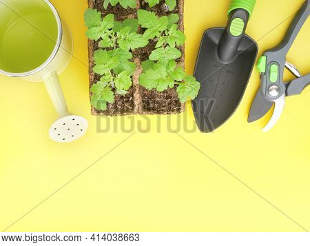 Garden And Horticulture Banner With Copy Space. Seedling, Watering Can And Gardening Tools On Yellow