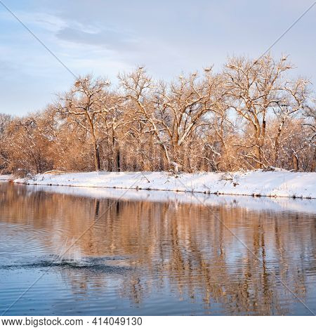 winter scenery of a small lake in northern Colorado with blue heron rookery and water splash from a diving beaver, one of natural areas along the Poudre River  in Fort Collins