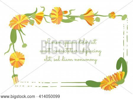 Squarish Frame Decorated By Calendula Plant Garland And Brush Strokes. Multicolored Desert Marigold