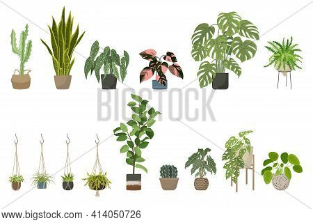 Green House Plants Set. Indoor Flower Pot, Stand And Macrame Plant Hangers Collection For Home And O