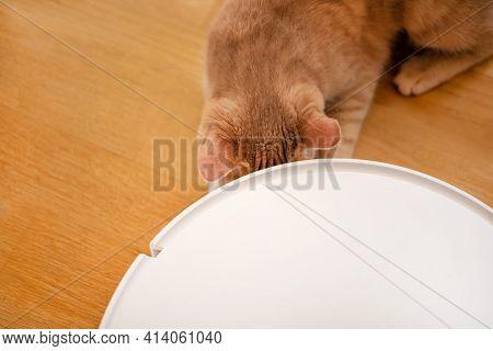 White Robot Vacuum Cleaner And Cat Pet
