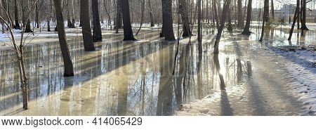 The Panoramic Image Of Spring Park, Black Trunks Of Trees Stand In Water, Sunny Weather, Long Shadow