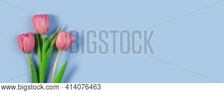 Pink Tulips Flowers On Blue Background. Card For Mothers Day, 8 March, Happy Easter, Valentines Day,