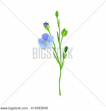 Blue Common Flax Or Linseed Cultivated Flowering Plant Specie Vector Illustration