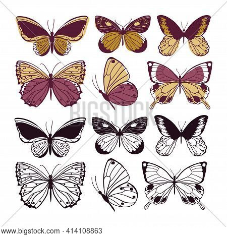 Butterflies Wild Insect Set. Arthropod Animals. Vector Illustration.