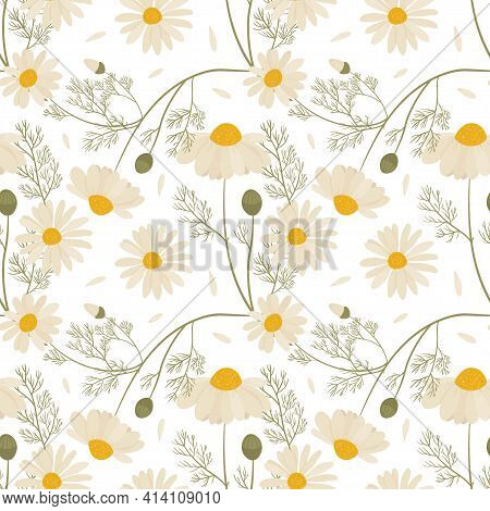 Vector Seamless Floral Pattern With Chamomile Flowers.