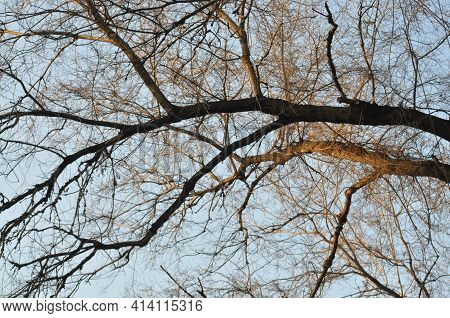 Beautiful Trees In Winter. Tree Branches Against A Blue Sky. Clouds Behind Tree Branches.