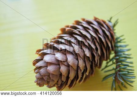Christmas Decoration Of Cones. Beautiful Cone On A Yellow Background. New Year And Christmas Decorat