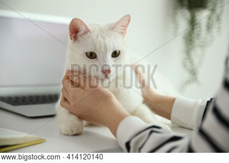 Adorable White Cat Lying Near Laptop And Distracting Owner From Work, Closeup