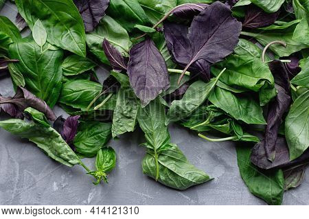 Green And Purple Basil Leaves On A Gray Concrete Background. Selective Focus. Close-up.