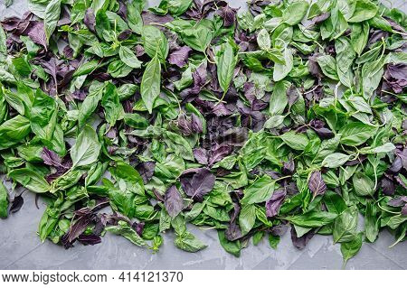 Green And Purple Basil Leaves Are Prepared For Drying. Selective Focus. Top View, Flat Lay.