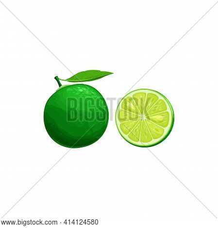Sudachi Fruit, Exotic Japanese Fruits And Tropical Food Isolated Icon. Vector Half Cut And Whole, Tr