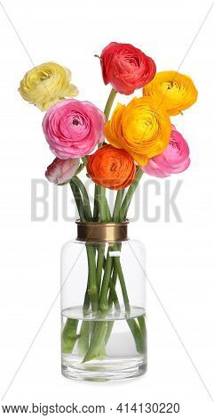 Beautiful Ranunculus Flowers In Glass Vase Isolated On White