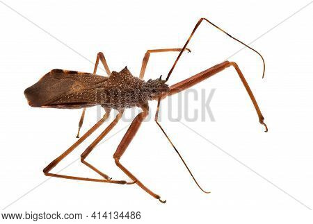Insect Macrophotography, Close Up And Studio Shot Of Animal With White Background