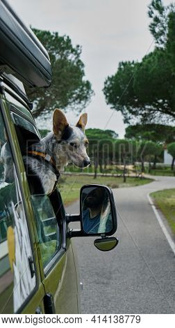 Dog in vanlife.  the dog in the RV looks out the window while driving