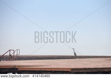Selective Blur On A Grey Heron, Also Called Ardea Cinerea, Seen From Afar Standing On A Pier In Pali