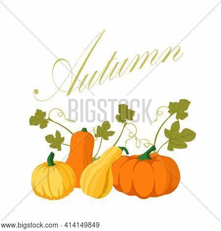 Pumpkin - Squash For Halloween Or Thanksgiving. Orange Squash Silhouette Isolated On White Backgroun