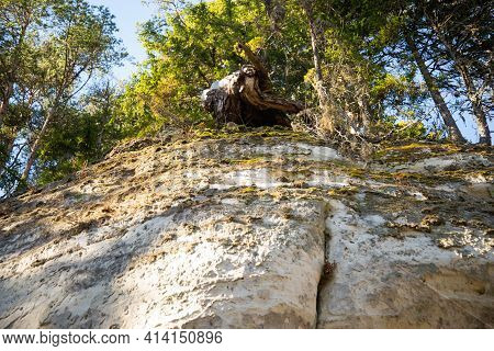 Sandstone Cliff Overlooking Up. On The Edge Of The Cliff Grows A Tree With Pronounced Roots That Gro