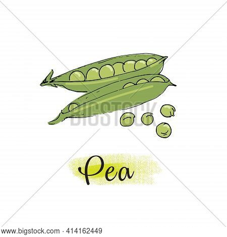 Vector Image Of Green Pea Pods. Isolated On A White Background.