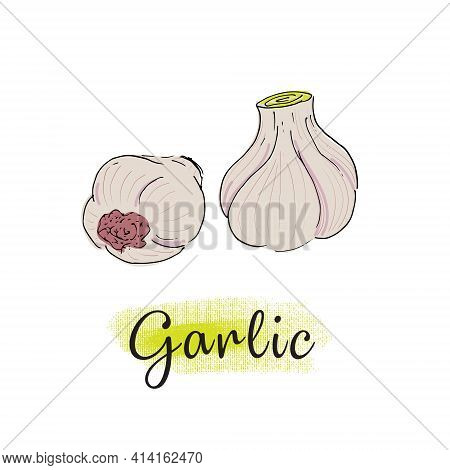 Garlic, Bulbs Of Garlic, The Illustration In Sketch Style. Isolated Vector Object.