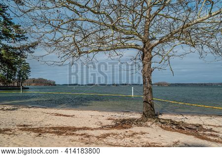 Beach With A Bare Tree By The Swim Area With A Yellow Boundary Floating Line Around The Depth Marker