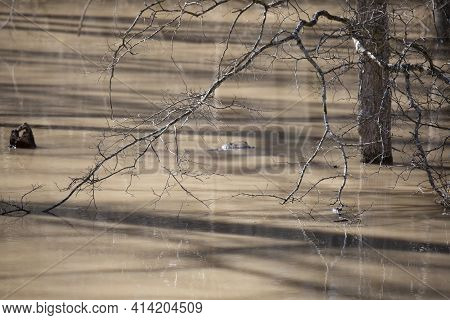 Bare Branch From A Bare Tree Hanging Over Muddy Water