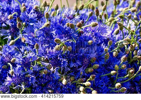 Background From A Bouquet Of Blue Cornflowers