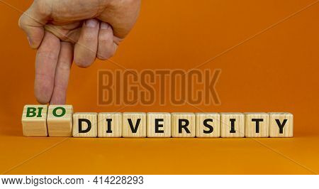 Diversity And Biodiversity Symbol. Businessman Turns Cubes And Changes The Word 'diversity' To 'biod