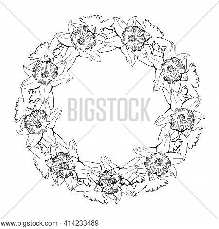 Botanical Circle Wreath With Hand Drawn Outline Flowers Daffodils, Narcissus. Black And White Monoch