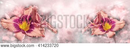 Unfocused, Widescreen Fractal Background With Two-tone Daylilies. Selective Focus
