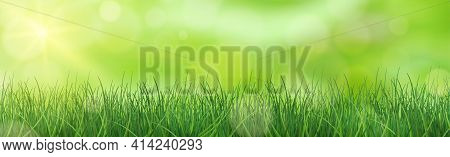 Lush Green Grass Lit By The Sun - Vector Illustration