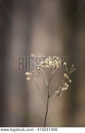 Close Up Of A Bouquet Of Dried Weeds