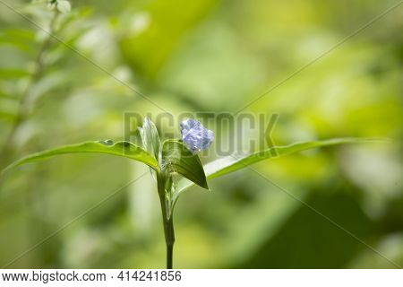 Single Stalk With A Violet Bloom Growing Against A Green Background