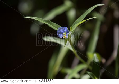 Violet And Yellow Bloom Growing From A Large Green Stalk