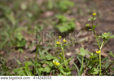 Bouquet Of Yellow Flowers In A Dry Yard