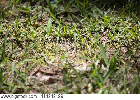 Freshly Trimmed Grass Growing Around A Bare Spot That Is Just Beginning