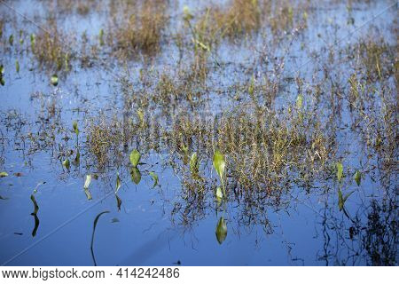 Green And Brown Foliage Growing Out Of A Lake