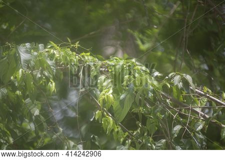 Haze Over A Tree Branch Covered With Lush, Green Leaves