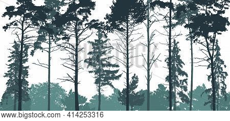 Pine Forest Silhouette. Natural Coniferous Trees. Beautiful Landscape, Woodland. Vector Illustration